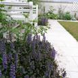 Garden_072