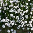 Garden_090