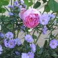 Garden_002