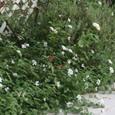 Garden_029