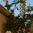 Garden_037_2