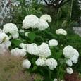 Garden_147