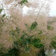 Garden_158
