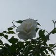 Garden_099