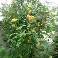 Garden_125