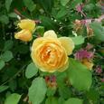 Garden_126